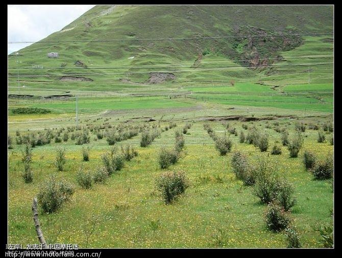 美丽的塔公草原2.jpg