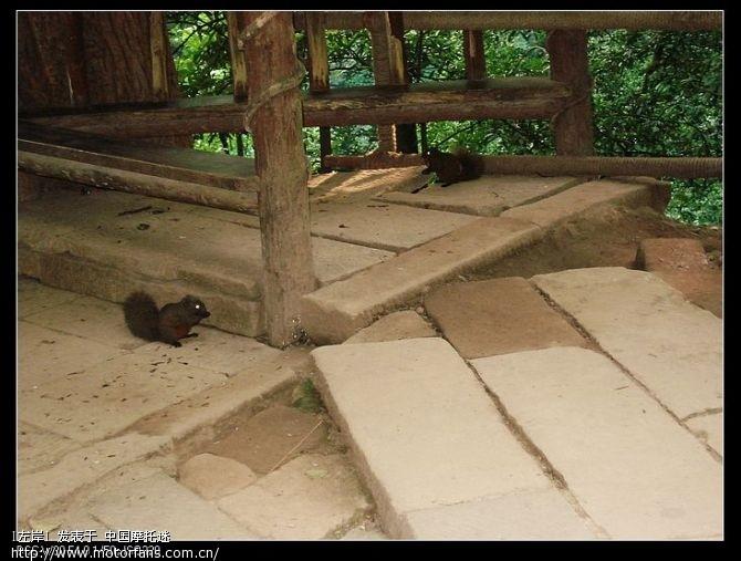 路遇两只小松鼠.jpg
