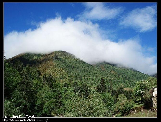 高山针叶林、蓝天白云,天气非常的好,景色也很漂亮.jpg