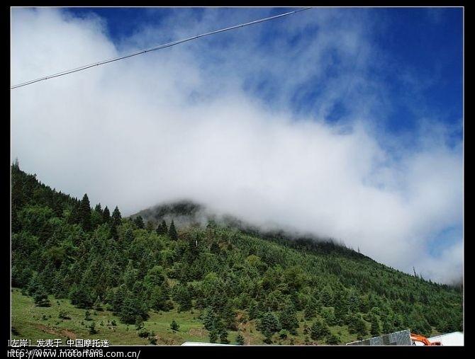 高山针叶林、蓝天白云,天气非常的好,景色也很漂亮2.jpg