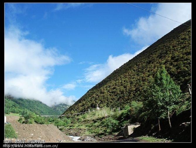 高山针叶林、蓝天白云,天气非常的好,景色也很漂亮1.jpg