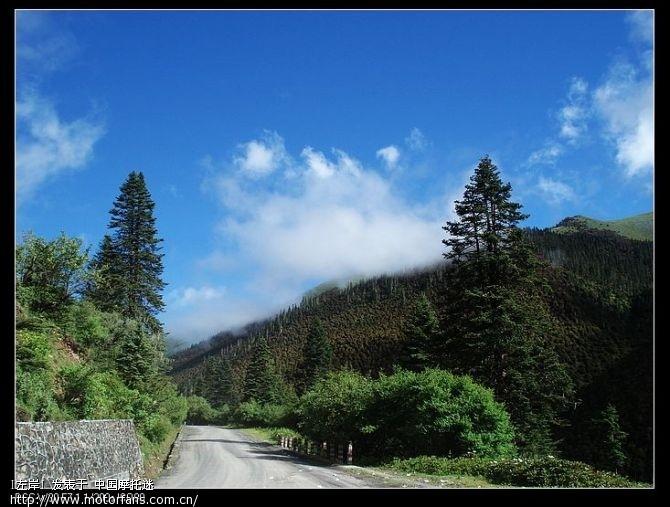高山针叶林、蓝天白云,天气非常的好,景色也很漂亮4.jpg