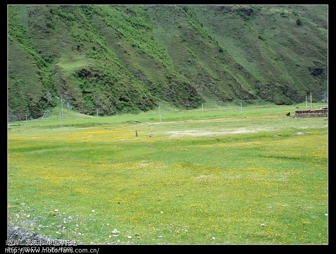 美丽的塔公草原.jpg