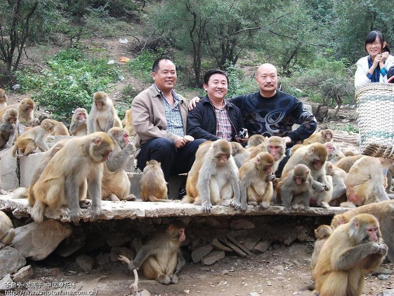 摩旅济源五龙口猕猴自然保护区,小沟背生态旅游区