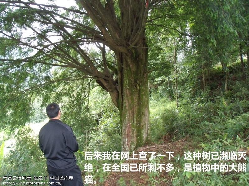 00000784_看图王.jpg