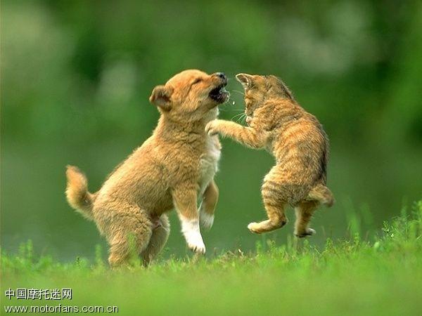 猫狗群殴论坛图片
