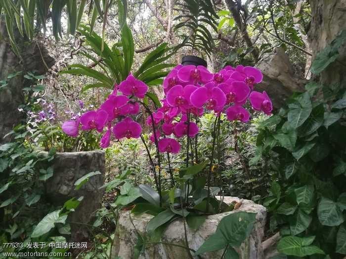 三亚森林工园的花朵