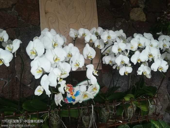 三亚森林公园的花朵