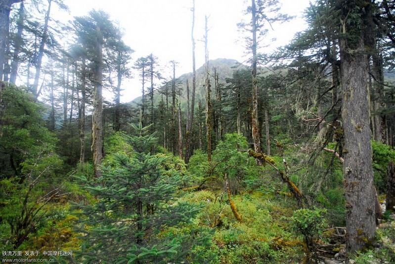 路两边的原始森林.JPG