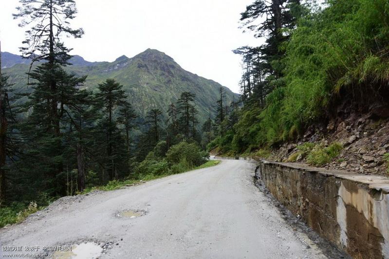 路两边的原始森林 (2).JPG