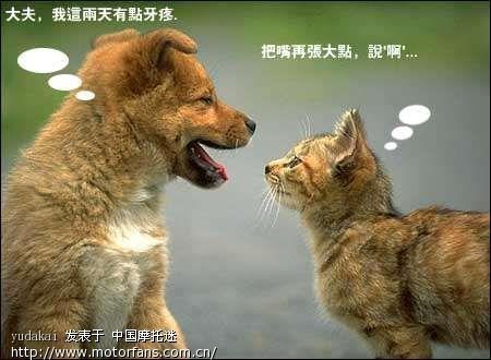 精彩的动物对话