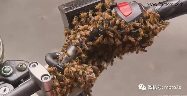 倒霉蛋的摩托车被蜜蜂霸占,看着这5000多只