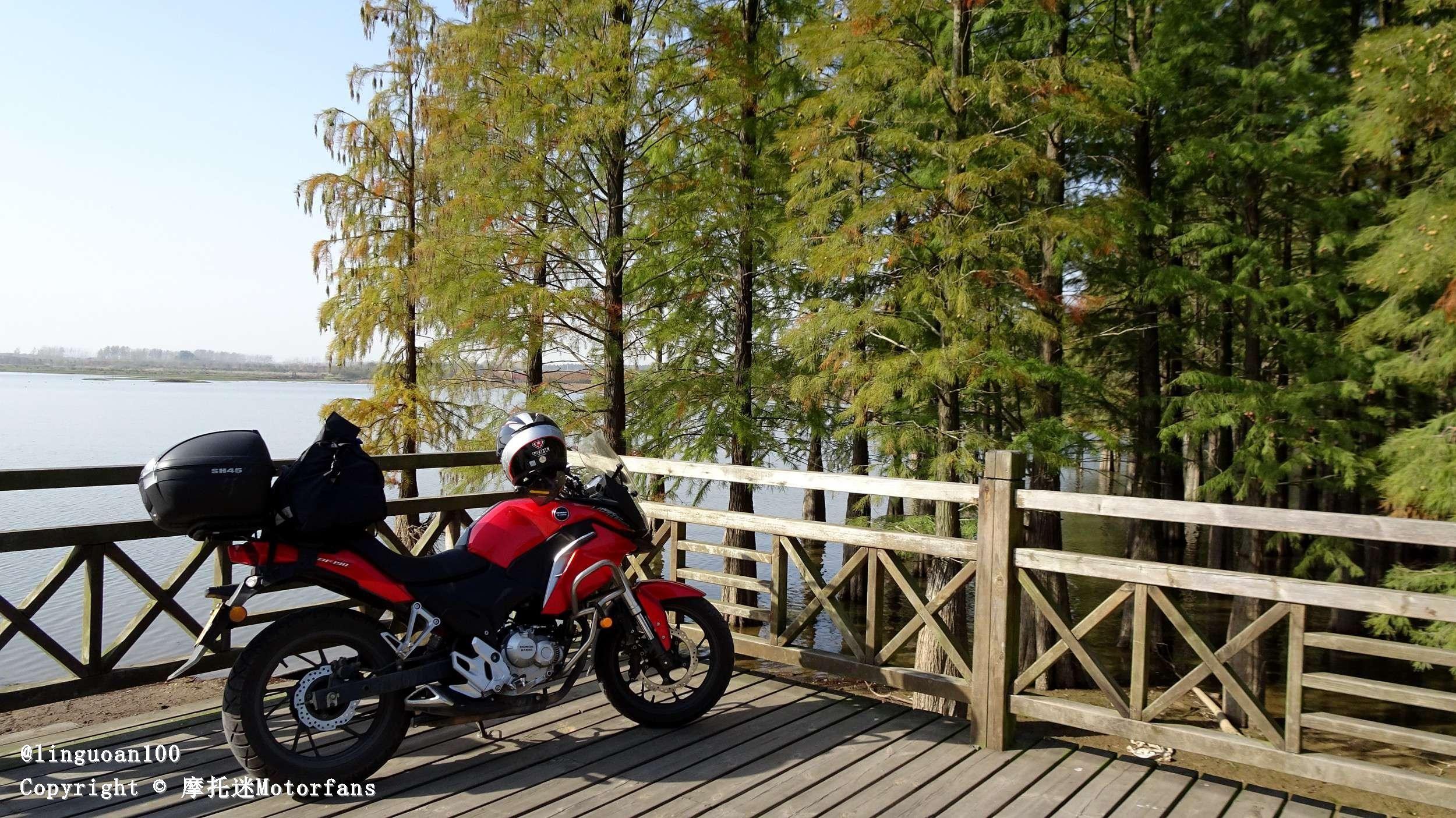 南京六合池杉林赏秋&滁州大横山和银杏林