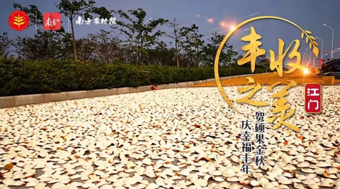 五羊-本田凈原助力中國農民豐收節肇慶會場