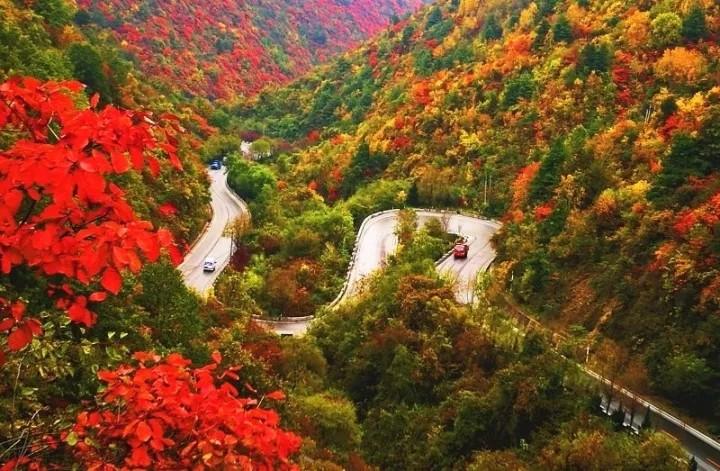 西安往西275km,有條秦嶺最美省道,打包層林盡染的饕餮景觀!