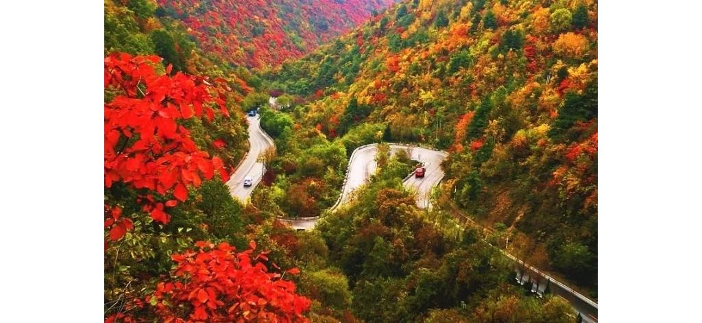 西安往西275km,有条秦岭最美省道,打包层林尽染的饕餮景观!